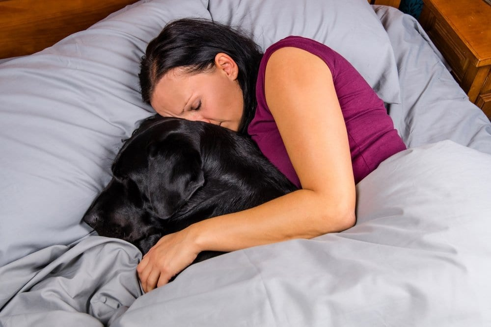 pets mattress risks sleep quality